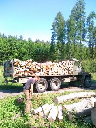 Cena dřeva z lesa